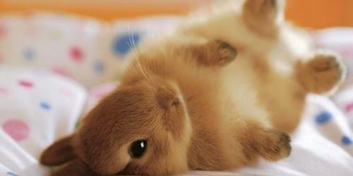 sweet-bunny[1]