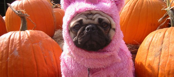 pumpkin_unicorn_pug[1]