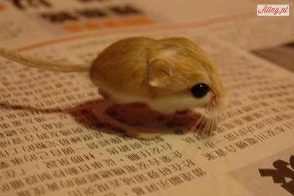 24 najmniejsze zwierzęta świata.
