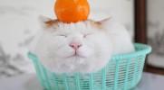Shironeko to najszczęśliwszy kot na świecie, śpi 24/7.