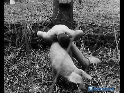 sex ze zwierzetami