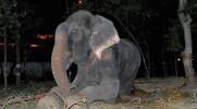 Po 50 latach w niewoli słoń Raju wreszcie został uwolniony. Ze szczęścia aż się popłakał.