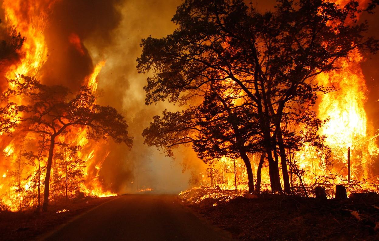 Znalezione obrazy dla zapytania pożary lasu