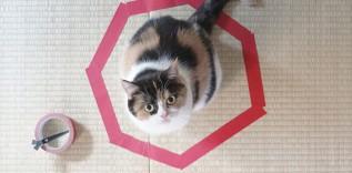 Jak uwięzić kota w 3 prostych krokach.