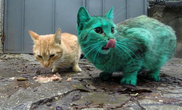 Animal Cake Tins Uk