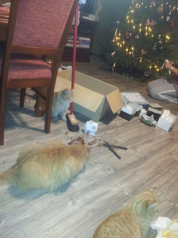 17 Rzeczy Które Wszystkie Koty Robią W święta