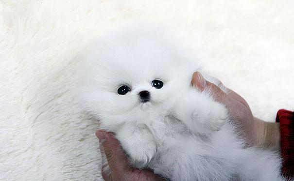 chubby-puppies-bear-cub-look-alikes-17-2