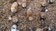 zao-fox-village-japan-34