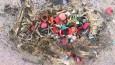 Dlaczego nie należy śmiecić na plaży…