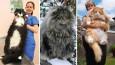 23 największe koty jakie kiedykolwiek widziałeś.