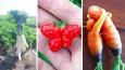 22 warzyw i owoców o niecodziennych kształtach, które przypominają inne rzeczy.