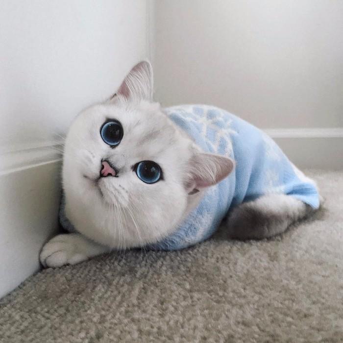 Oto Coby Zachwycający Kot O Najpiękniejszych Oczach świata