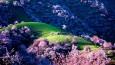 Kwitnąca Morelowa Dolina przyciąga do Chin turystów z całego świata.