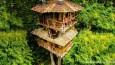 Wykupili 600 akrów lasu, by wybudować na jego terenie tropikalny hotel na drzewie.