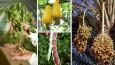 21 popularnych warzyw i owoców, których prawdopodobnie nigdy nie zaobserwowałeś w naturze.
