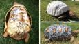 Ranny żółw z Brazylii otrzymał pierwszą na świecie protezę skorupy z drukarki 3D.