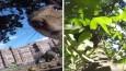 Ciekawska wiewiórka ukradła kamerę GoPro. Jej właściciel nie mógł wymarzyć sobie lepszego operatora!