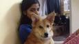 Dziewczyna odwołała ślub po tym, jak jej przyszły mąż kazał jej pozbyć się psa!
