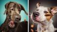 24 genialne miny psów, próbujących złapać jedzenie w locie!