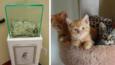 Anonimowy darczyńca wrzucił 8000$ do skrzynki w schronisku dla zwierząt!