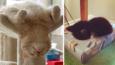 19 zdjęć, które są dowodem na to, że koty potrafią spać dosłownie wszędzie!