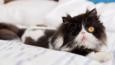 Poznajcie Spaghettio - najsłodszego kociego pirata, który stracił oko, ale nie energię i pewność siebie!