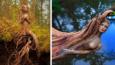 Artystka tworzy niezwykłe rzeźby z drewna, korzeni drzew i muszli, które wydają się mieć własne dusze.