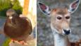 Zastanawiałeś się kiedyś, jak wyglądałyby zwierzęta, gdyby miały oczy z przodu głowy? Tutaj znajdziesz odpowiedź!