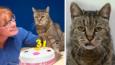 Najstarszy kot na świecie właśnie skończył 31 lat i ma przed sobą jeszcze wiele żyć!