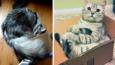 20 kotów wylegujących się w najwygodniejszych miejscach na świecie, czyli pudełkach!