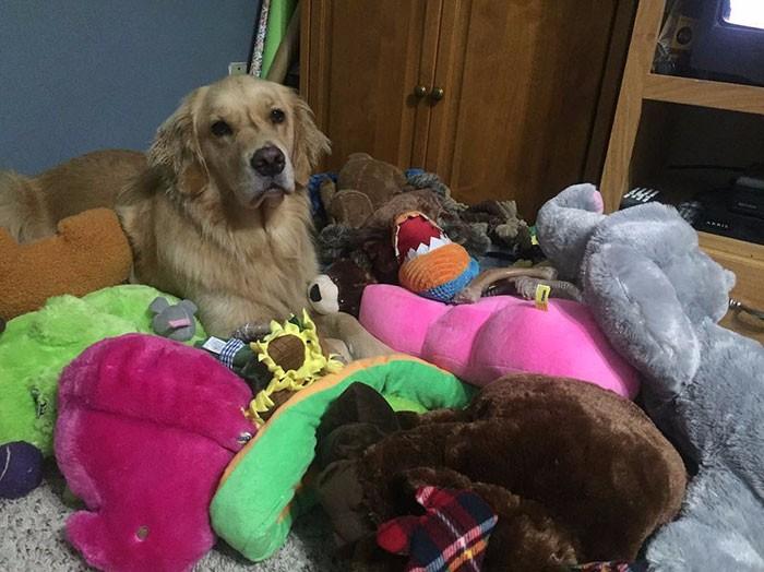 Mojito Niezwykły Pies Terapeutyczny Który Każdego Dnia