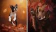 15 magicznych zdjęć psów cieszących się jesienią.
