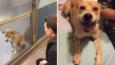 15 wzruszających zdjęć zwierząt przed i po adopcji.