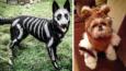 27 genialnych kostiumów halloweenowych dla zwierzaków.