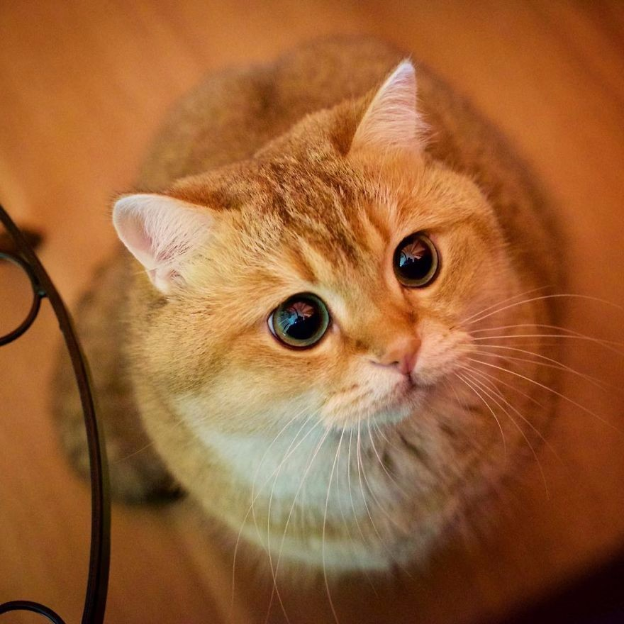 Kot W Butach Znany Z Przygód Shreka Naprawdę Istnieje Poznajcie