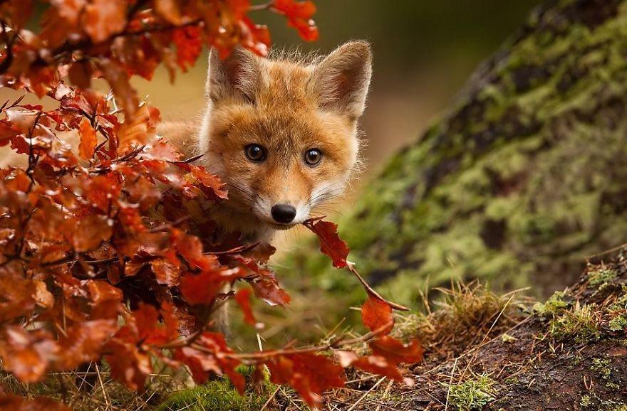 23 zwierzęta, które się cieszą, że jest już jesień.
