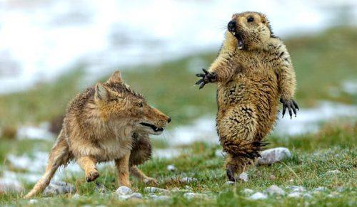 Randki z miłośnikami dzikiej przyrody